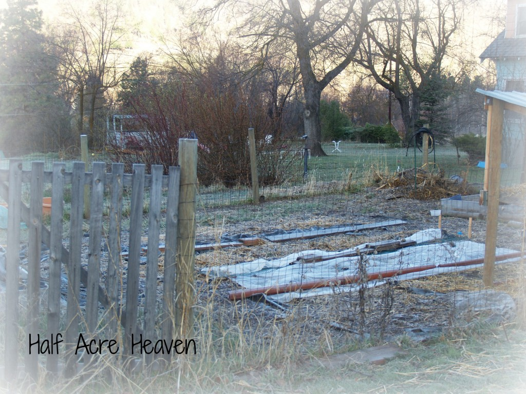 The garden isn't looking like much,  but take a closer look. . .